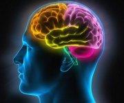 energia__mozog_veda_ludstvo_inteligencia_foto_corbis_rozvoj_kapacita_plna